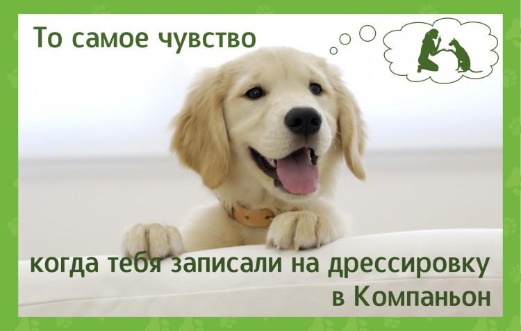 дрессировка_щенков